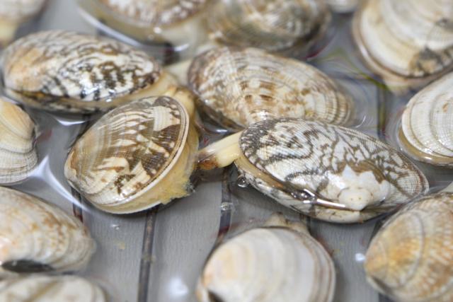 貝の砂抜きイメージ