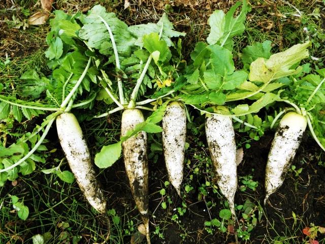 泥つき野菜のイメージ