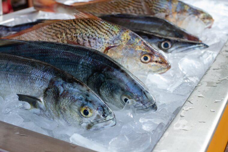 鮮魚イメージ